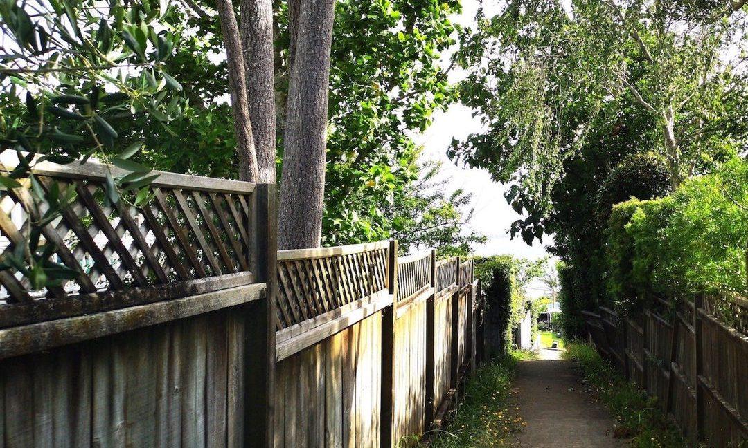 large trees on boundary